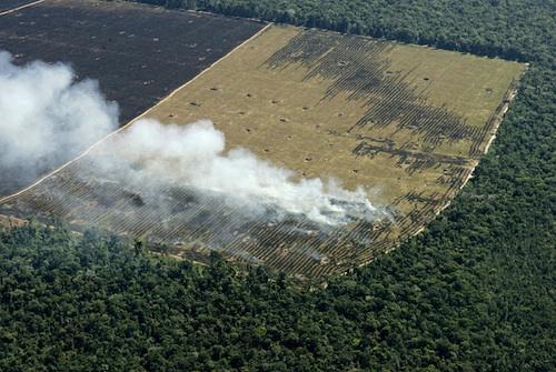 BR-Amazonia-deforestación