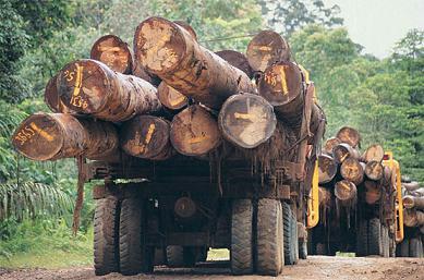 deforestacion5