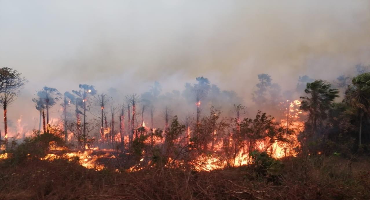 42% más de incendios en reservas forestales en lo que va del año en Bolivia  – Fundación Solón